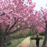 倶利迦羅さん 八重桜まつり