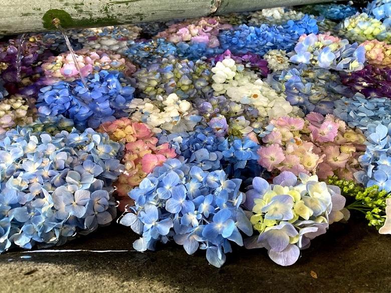 冷やし紫陽花
